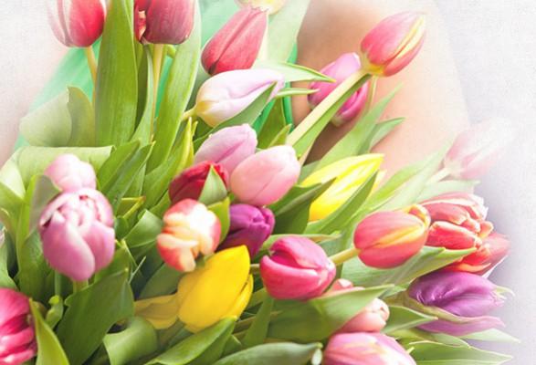 Voorjaarsbloemen Veenendaal