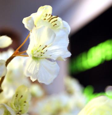 Roelofsen Bloemen bedankt u voor uw recensie