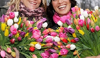 Tulpen aanbieding speciaal voor het voorjaar